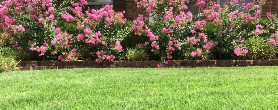 A well watered lawn