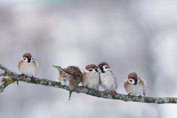 five birds sitting on a tree branch